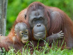 Borneo Wildlife